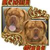 Нобивак КС (Nobivac КС) - последнее сообщение от Ольга-ФиКс